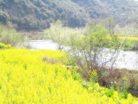 春暖花开黄绿禅 不了了之拨心弦 - 罗马假日 - 在路上