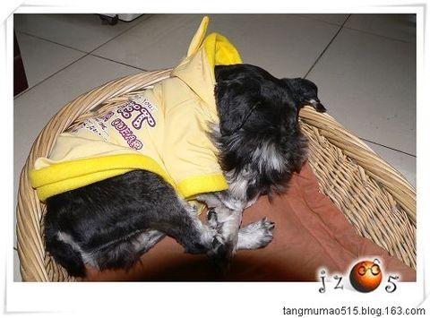 大亨2009的新年礼物 - tangmumao515 - 桔子饭团的魔法屋