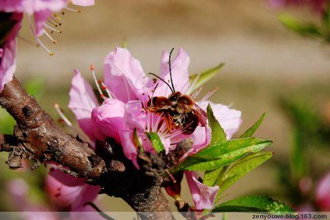 蜂花恋 - 真悠 - 我的博客