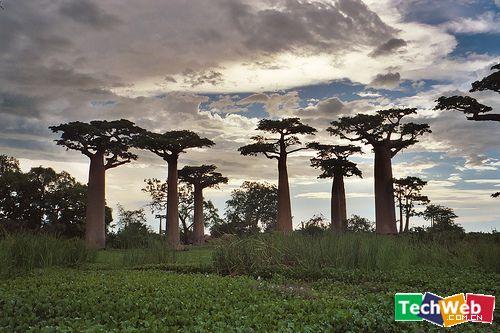 【引用】世界10大奇树 - 荣荣 - 自主人生