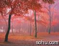 动态风景图片(个人文集) - 芳芷香惠 - 芳芷香蕙欢迎你