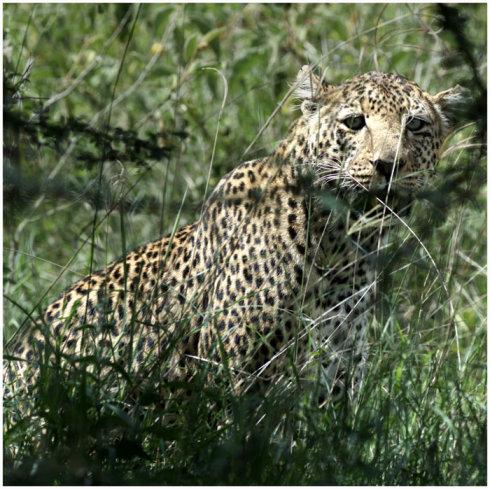 狂野东非-肯尼亚《九》 - Y哥。尘缘 - 心的漂泊-Y哥37国行