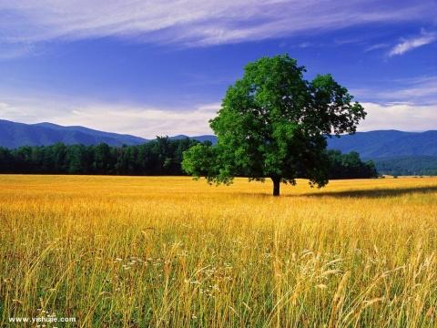 引用 极至美景 - 美丽心情 - chunhuaminmei 的博客