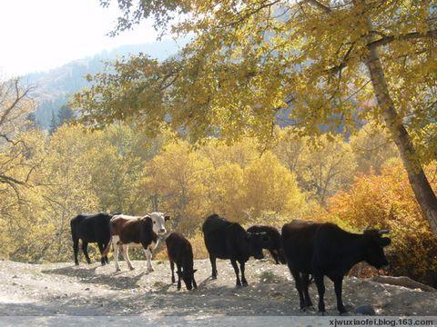 山沟里的秋之   谢家沟  - 红色毛芨芨 - xjwuxiaofei的博客