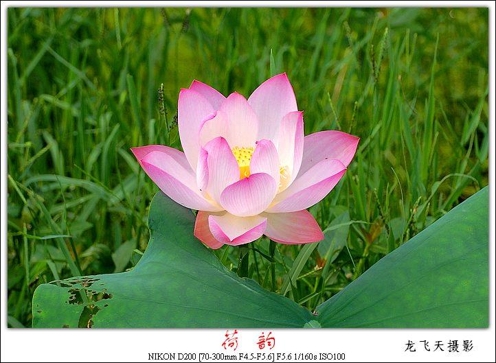 (原创摄影)水映荷影 - 龙飞天的日志 - 网易博客