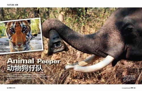 动物敢死队 - 新探索 - 新探索QUO杂志
