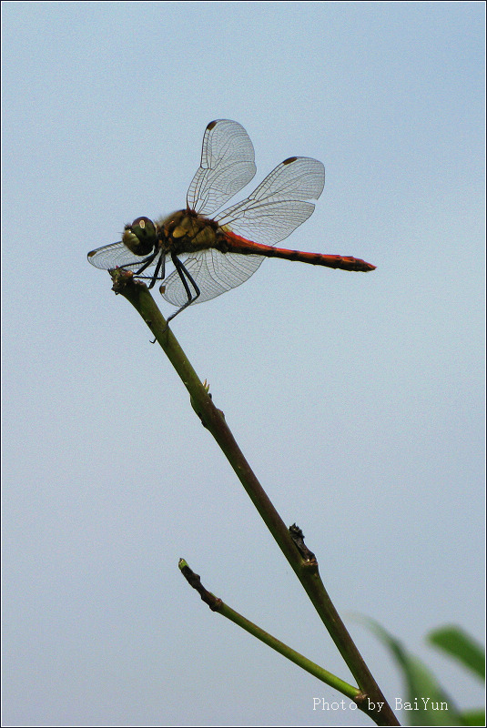 日本民歌《红蜻蜓》 - Shirley - Shirley的家