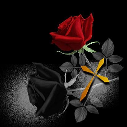 玫瑰素材 - 唯美在指间尽情敲击 - 唯美在指间尽情敲击 的博客
