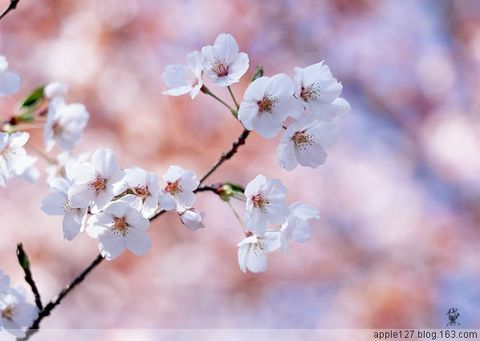 红颜如花(3)文/平子 赠陌上纤尘 湲湲制作 - 湲湲 - 湲湲小筑