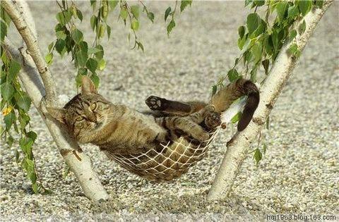动物的精彩瞬间抓拍(图) - 晉陽老頭 - 晋 阳 老 头 的 一 亩 三 分 地