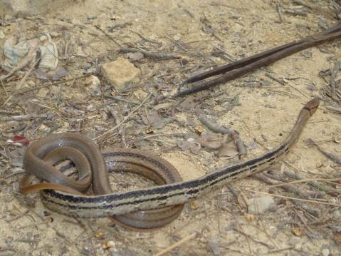 爬行动物的佼佼者——蛇1