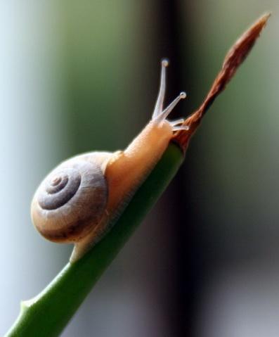 蜗牛成长的轨迹 - 落花有意 - 化外之地