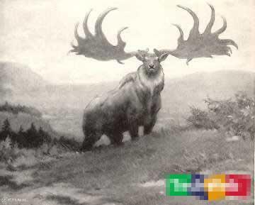 大最令人惊异的灭绝动物 人类的遗憾