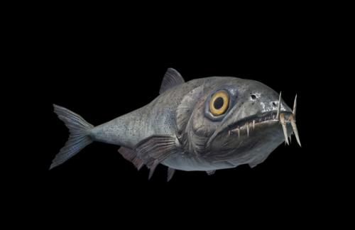 海底现存史前动物视频