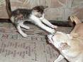 狗狗搞笑视频集 - 心声潮起 - 心声潮起