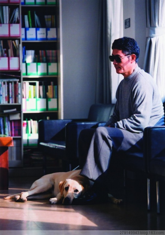 《导盲犬小Q》从此你就爱上拉不拉多犬了 - 辛巴 - 【辛巴·色计】