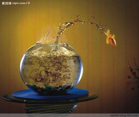 七秒鱼 - 艾之宁耶 - 自由与和平.博客精神---艾之宁耶