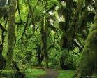 我们和森林 - 愚婆智叟xxjnzy石家庄 庄家石 - 十六字令