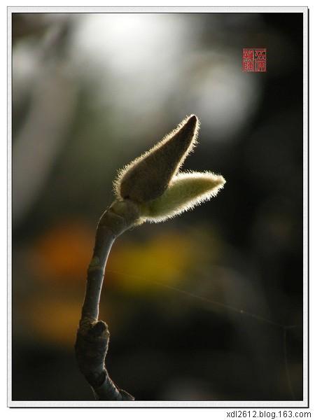 最后的秋色(原摄) - 五味杂陈 - 我的人生驿站