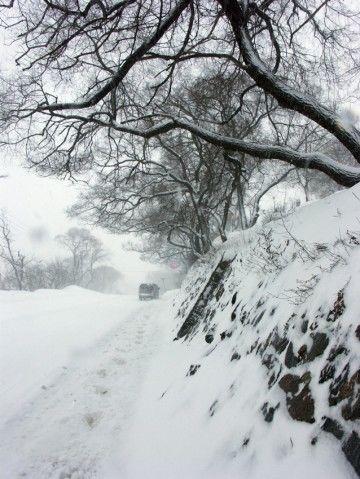 Зимний сон 冬之梦 - 温润如玉 - 温润如玉的博客