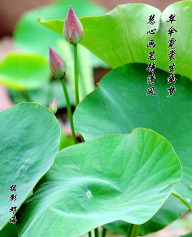 荷塘 - 书魂 - 我的博客