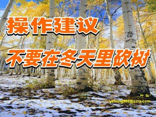 操作建议——不要在冬天里砍树 - 叶弘 - 叶弘 谈股市股民股票