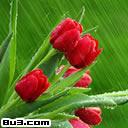 (10)豆蔻花——以花供塔 生降花雨 - 本善 - 南無阿彌陀佛