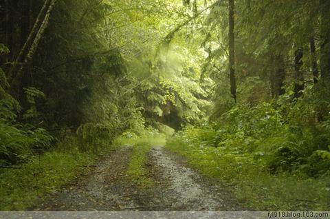 [原创]  温带雨林历险记 - 阳光月光 - 阳光月光