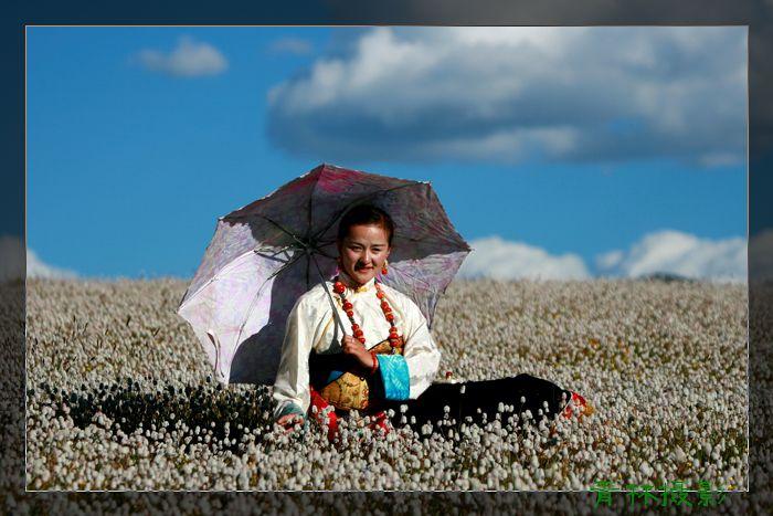 (原摄)三江源花海里打阳伞的女孩 - 青林 -