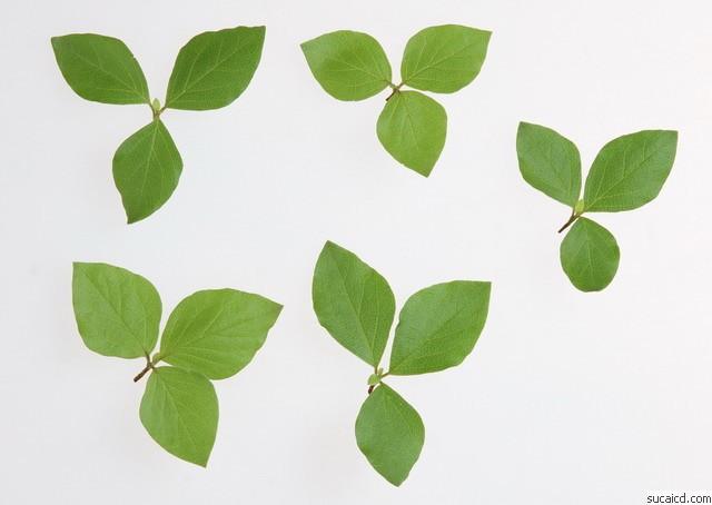 背景 壁纸 绿色 绿叶 设计 矢量 矢量图 树叶 素材 植物 桌面 640_454