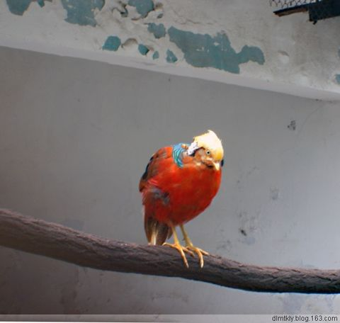 (*^__^*) 嘻嘻……拍哩是个鸟(原创) - dlmtkly - 爱美树:在光影里寻觅······
