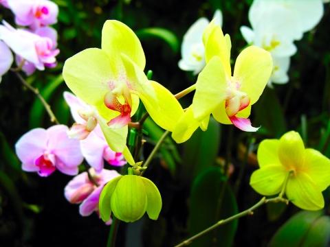 鲜花~欣赏 - 珍惜缘分 - 珍惜缘分的家园