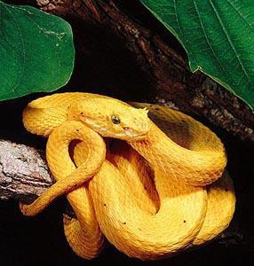 世界最毒的蛇