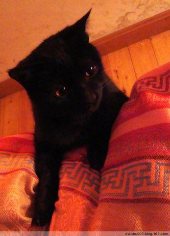 喜欢装无辜的小黑 - 小狐505 - 风为裳的博客