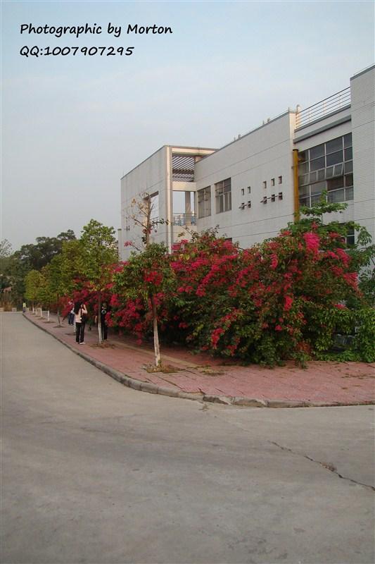 华南农业大学的风景