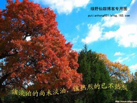 爱在深秋落叶时 - 绿野仙踪 - 绿野仙踪的博客