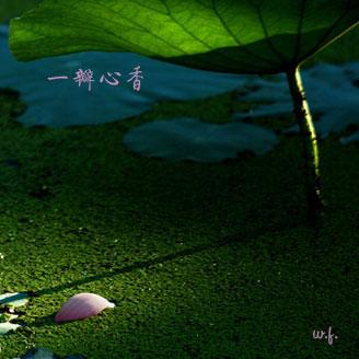 [晚风]一瓣心香 - 晚风 -