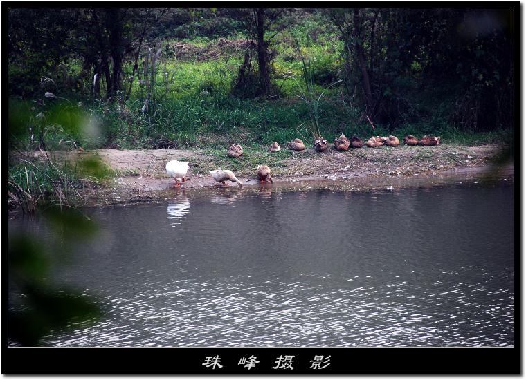 【原创】重游白河峡谷(2/4) - 珠峰 - 走南闯北