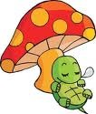 悠闲的乌龟