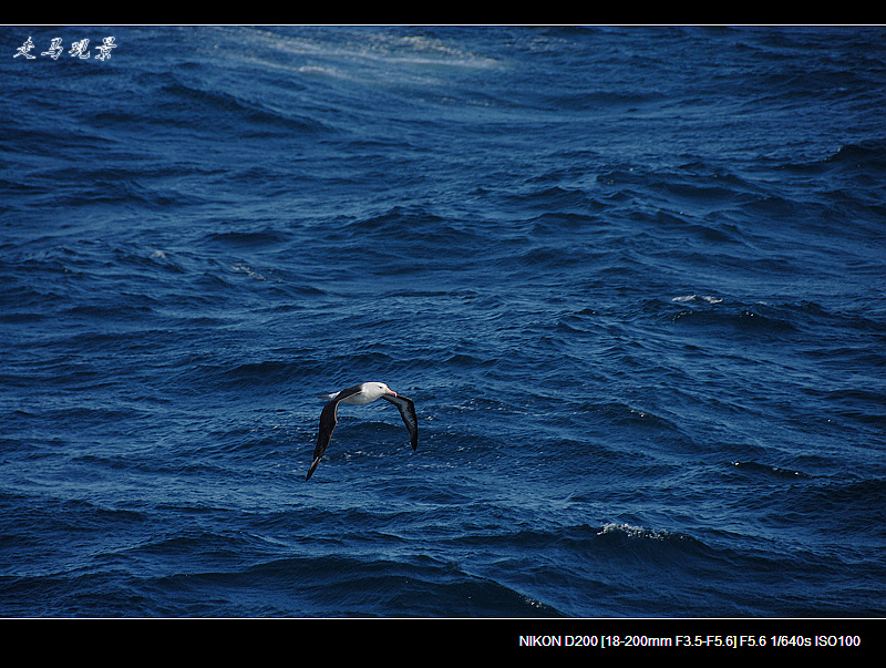 啊,南极(五) - 西樱 - 走马观景