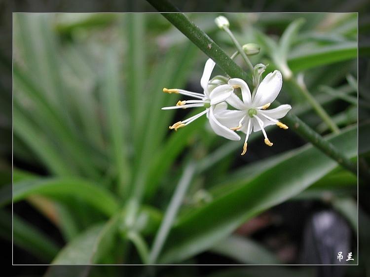 植物图谱7 - 沧海的日志 - 网易博客 - 流通 - 流通博客
