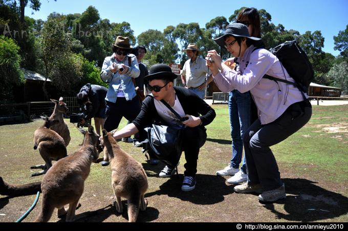 在澳大利亚与动物狂欢(上)-Animals Encounter@Mel - 鱼儿 - 鱼儿的遨游生活