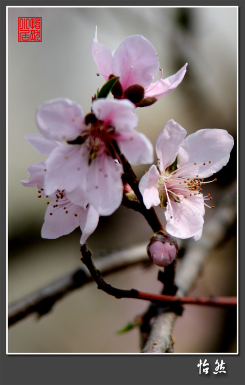 2009年2月16日 - 怡然 - 怡然小居