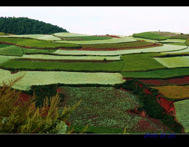 色彩斑斓锦绣园【原】 - 自由诗 - 人文历史自然 诗词曲赋杂谈