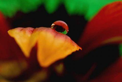 露珠 - 玫瑰小手 - 陶然亭