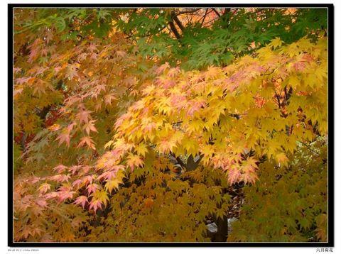 六月荷花摄影诗歌《秋色如枫》18 - 六月荷花 - 六月荷花的池塘