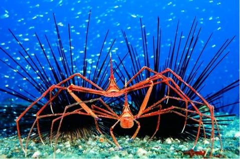 2008年度世界野生生物摄影大赛获奖作品 - 绿眉毛 - 弘扬舟船文化 传承海洋文明