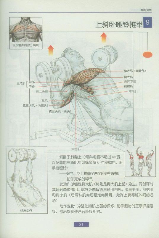 健身图解,哑铃健身图解,男子哑铃健身图解_点力图库
