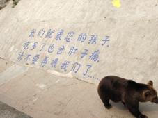 北京之行二(3)——动物园  奥运 - 透明雨 - 透明雨的博客