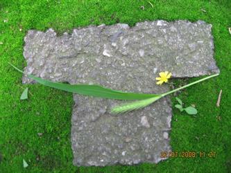 T形台上的花与草 20080722
